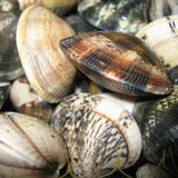 Raw Clams closeup. In a kitchen Royalty Free Stock Photography