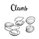 Raw clams isolated on white background Stock Image