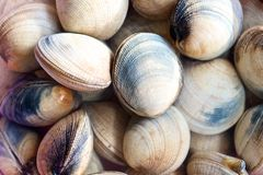 Raw Clams in the market. Raw Clams in the fish market in Ho Chi Minh CIty in Vietnam Stock Image