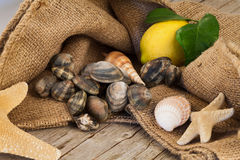 Raw Clams Still Life. Still life with raw clams and other type of shells Stock Photos