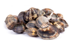 Raw Clams On White Background Stock Photography