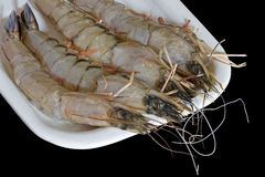 Raw cleaned prawns. On a white plate royalty free stock image