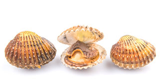 Raw Cockle VII. A group of raw, fresh cockle over white background Stock Photo