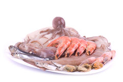 Raw cocktail of seafood Stock Images