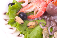 Raw cocktail of seafood on green salad Royalty Free Stock Image