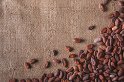 Raw cocoa beans Royalty Free Stock Image