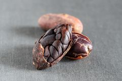 Uncooked formaster cocoa beans royalty free stock photo