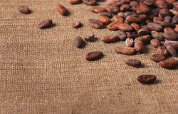 Raw cocoa beans on sacking close-up stock photos