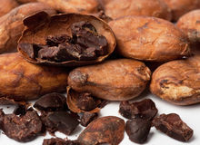 Raw cocoa beans Stock Photography