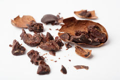 Raw cocoa beans stock image