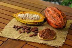 Raw cocoa fruit, cacao beans and powder on wooden table