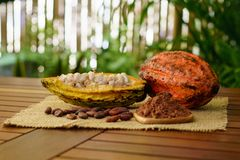 Raw cocoa pods, cacao beans and powder on wooden table. On nature background royalty free stock images