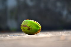 Coconut RawPhotograph. Beautiful green raw coconut photograph with dark background stock photo