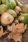 Raw Coconuts at the Coconut Farm. for Cooking Royalty Free Stock Image