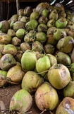 Raw Coconuts at the Coconut Farm. for Cooking Royalty Free Stock Images