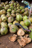 Raw Coconuts at the Coconut Farm. for Cooking Stock Photos