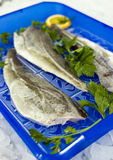 Raw cod fillet. Raw sea food - cod fish fillet with orange slices Royalty Free Stock Image