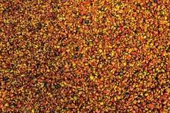 Raw Coffee Bean Royalty Free Stock Photography