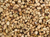 Raw coffee bean Royalty Free Stock Photos