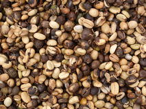 Raw coffee bean Stock Photos
