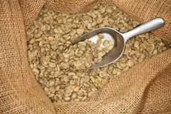 Raw coffee beans Royalty Free Stock Photo