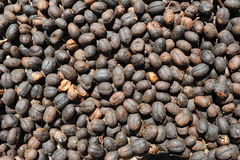 Raw coffee beans. At Conception de Ataco on El Salvador Stock Images