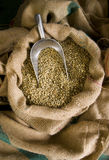 Raw Coffee Beans Being Scooped Burlap Bag Stock Image