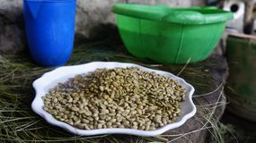 Raw Coffee Beans in Ethiopia. Raw Coffee in Ethiopia as preparation for the traditional coffee ceremony Stock Images