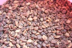 Raw coffee beans have been sorted ,Low quality raw coffee beans stock photo