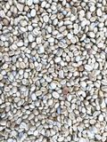 Raw coffee beans. Are dried in the sun Stock Photography