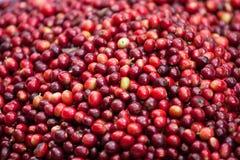 Raw coffee beans Stock Photo