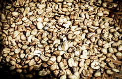 Raw coffee beans under morning light Stock Photos