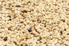 Raw coffee beans. White coffe beens on a ground for drying Royalty Free Stock Image