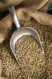 Raw Coffee Seeds Bulk Scoop Burlap Bag Agriculture Bean Royalty Free Stock Images