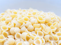 Raw conchigliette. close-up Royalty Free Stock Image