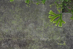 Raw concrete background Royalty Free Stock Photos