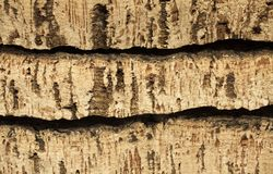 Raw cork planks Stock Photos
