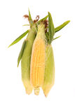 Raw corn. Royalty Free Stock Photography
