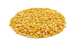 Raw Corn. Pile of Raw Corn ready to be used to make popcorn all in a round circle stock photos