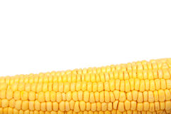 Raw corn Stock Photography