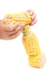 Raw corn Royalty Free Stock Image