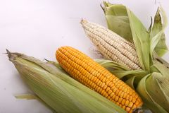 Raw Corn. Close view on Homemade golden fresh corn Stock Photo