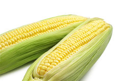 Raw corn closeup. On white background Stock Images