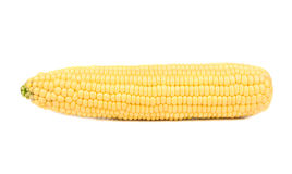 Raw corn cob Royalty Free Stock Images