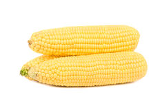 Raw corn cob. Three raw corn cob on a white background Royalty Free Stock Photography