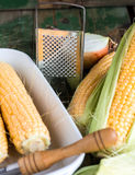 Raw corn on the cob to cook bake. On a green wooden background Stock Images