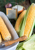Raw corn on the cob to cook bake,vertically. Raw corn on the cob to cook bake on a green wooden background,vertically Royalty Free Stock Photo