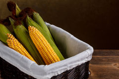 Raw corn cobs. In wicker basket Stock Images