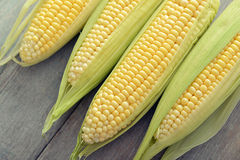 Raw corn cobs. On wooden background closeup, top view Stock Images