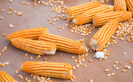 The raw corn Royalty Free Stock Photo